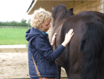 EQUENERGY: Wellbeing Naturally