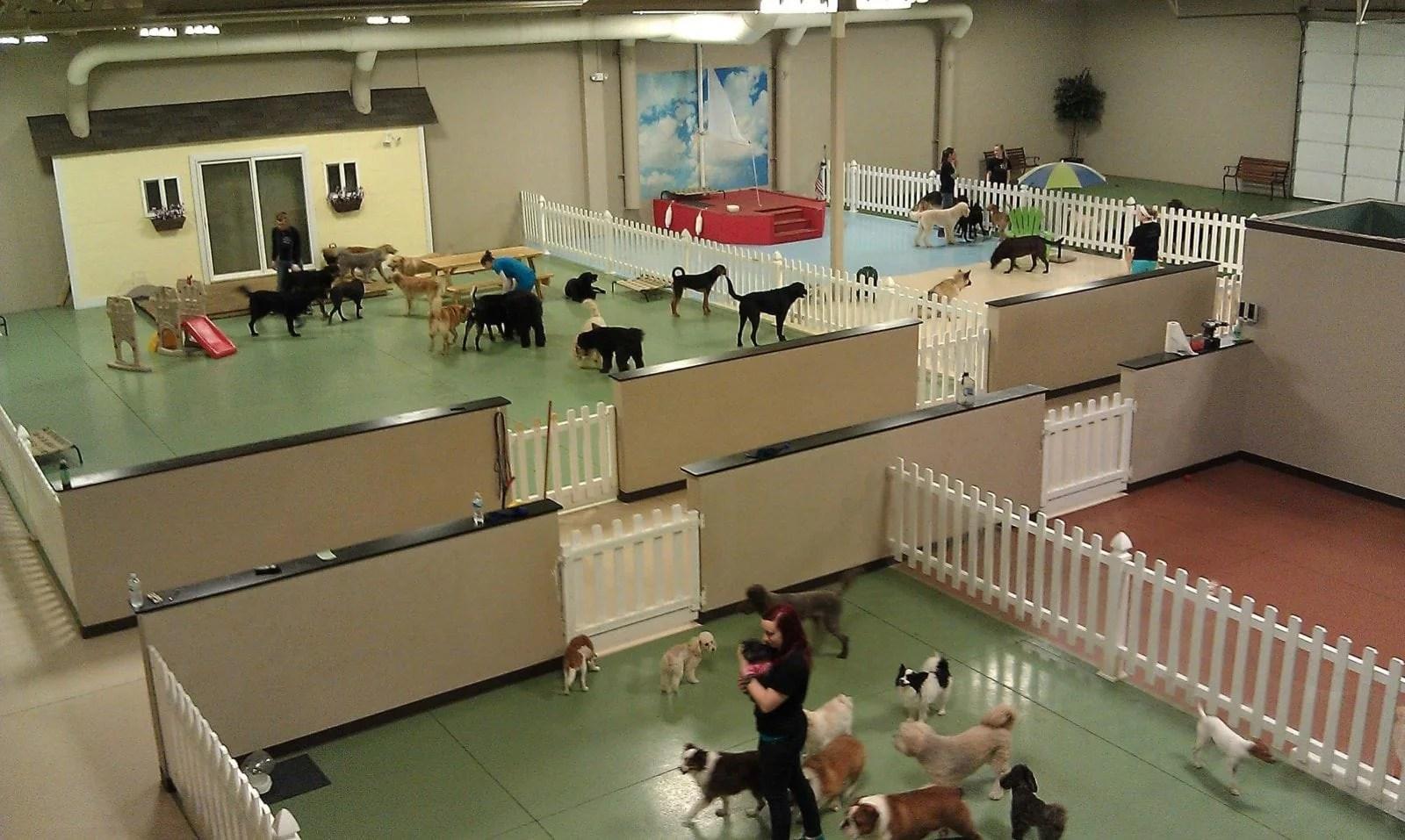 Soulmutts Toronto Ltd. Dog Walking, Dog Daycare & Dog Boarding