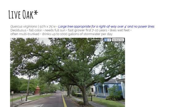 algiers-point-presentation-4-trees-10