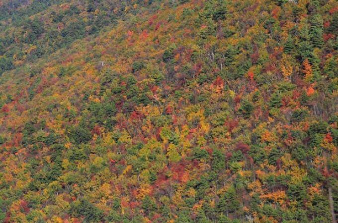 leaves-filter