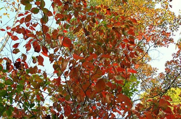 Leaves4.jpg