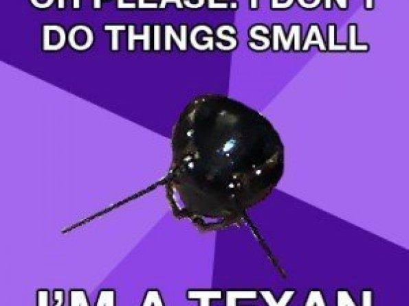 Crickets, Crickets Everywhere!