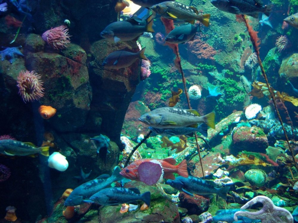 the-vancouver-international-airport-showcases-works-by-native-artists-like-bill-reid-and-the-vancouver-aquarium-where-you-can-see-more-than-5000-marine-creatures-in-the-20000-gallon-tank