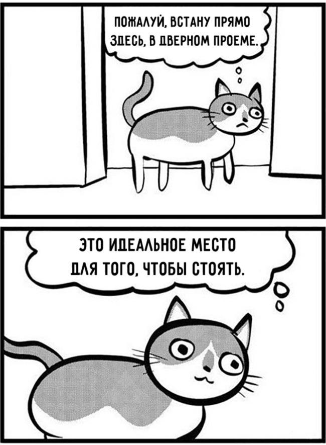комиксы-про-отношения-кошек-и-людей-15