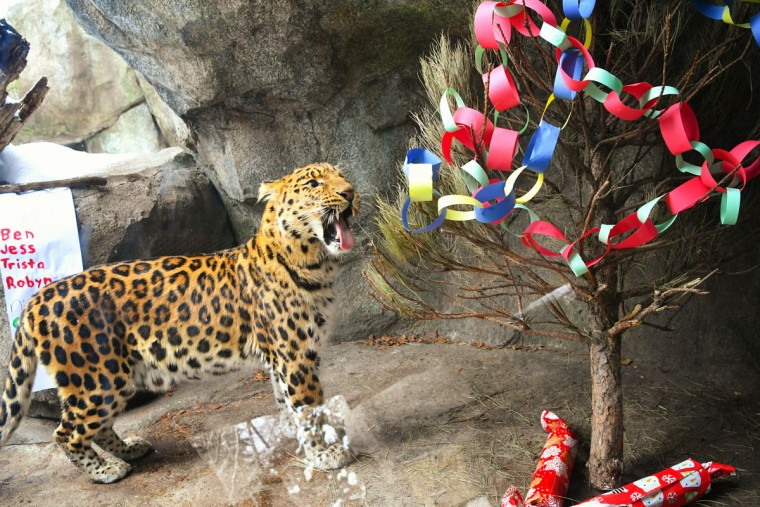 tns_life-pets-hdy-leopard-gifts-2-ms-760x5071