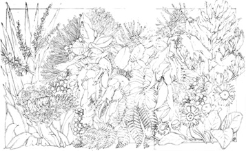 New Zealand Wildflowers Drawing