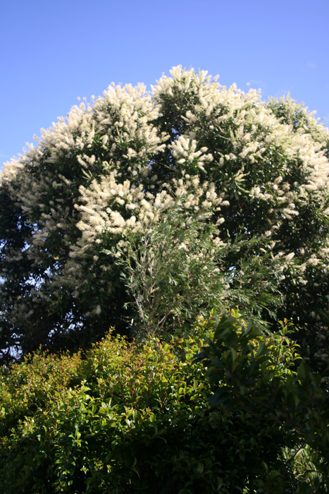 ivory-curl-flower-tree-1
