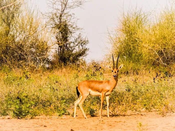 life at HACRA desert stay Rajasthan near Osian