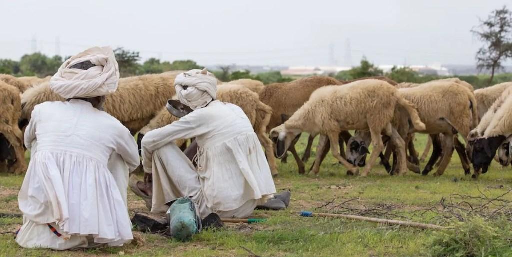 rabari herders in Kutch gujarat