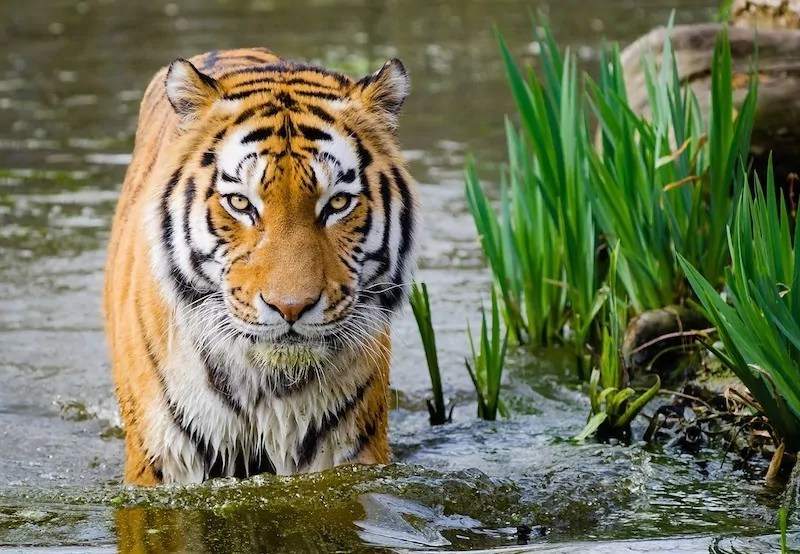 Sundarbans boat tour Bangladesh
