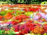 """Canos Cristales (known as """"the river of five colors"""") in Colombia3"""