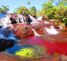 """Canos Cristales (known as """"the river of five colors"""") in Colombia5"""