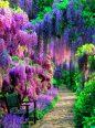 wisteria-tunnel-kawachi-fuji-garden-japan-1-442x600