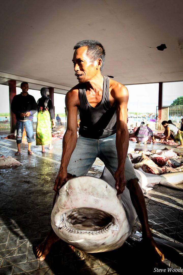 A Fish Full of Dollars, award-winning film, shark fishing, Indonesia, documentary, conservation, dead bull shark at Tanjung Luar, award-winning filmmaker