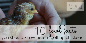 10 fowl facts-4