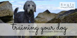 training your dog-2