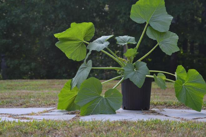 seedling planters