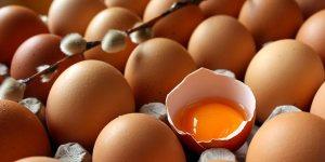 ovos organicos