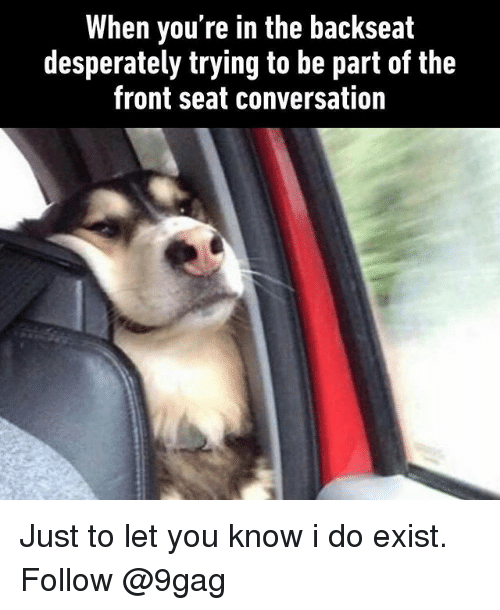 We Love Seeing A Large Dog Sitting In The Driver S Seat Of A Car