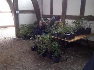 plants etc 020