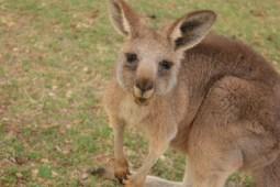 australia (25)