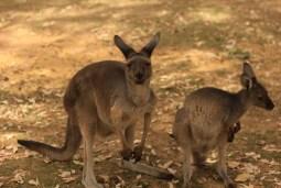 australia (26)