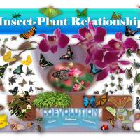 Do Plants and Insects Coevolve? 🥀🐝🌺🦋
