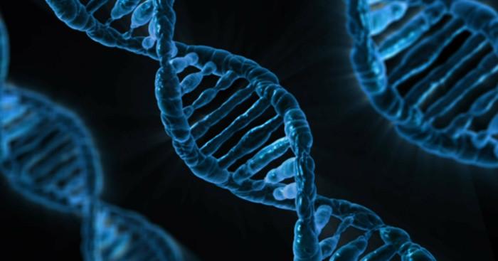 adn, telomeri, cromozomi