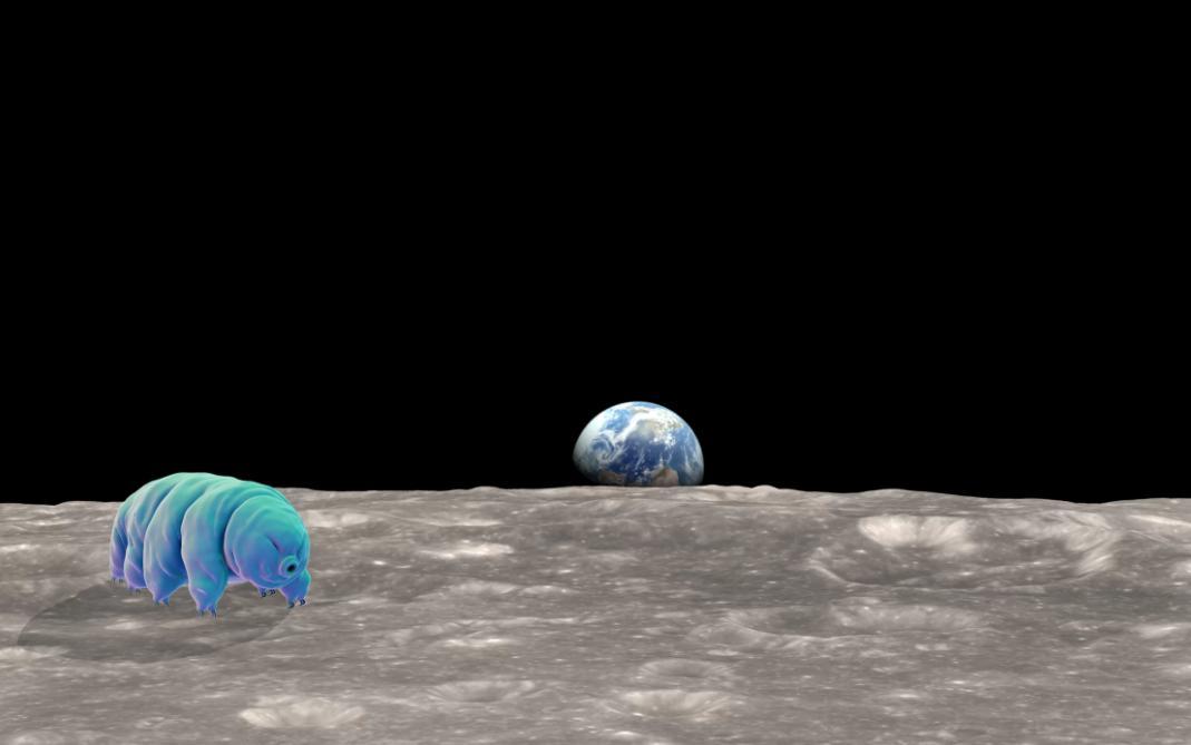 viata pe luna