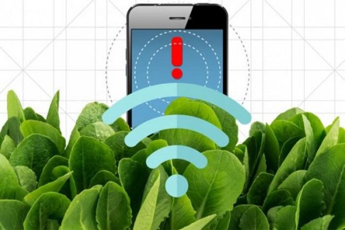 spanac, smartphone, nano-bionica