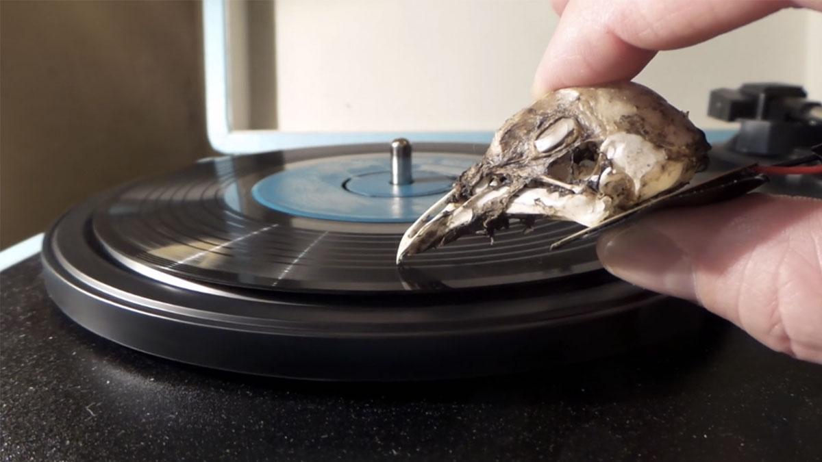 seagull-skull-needle-eyecatch