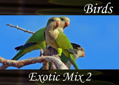 SoundScenes - Atmo-Birds - Exotic Mix 2