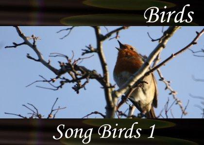 SoundScenes - Atmo-Birds - Song Birds 1