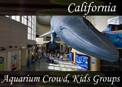 SoundScenes - Atmo-California - Aquarium Crowd, Kids Groups