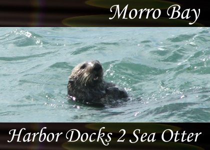 SoundScenes - Atmo-California - Morro Bay, Harbor Docks 2, Sea Otter
