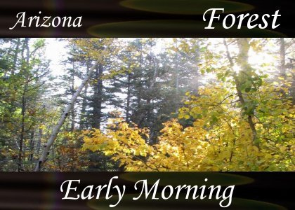 SoundScenes - Atmo-Forests - Arizona, Early Morning