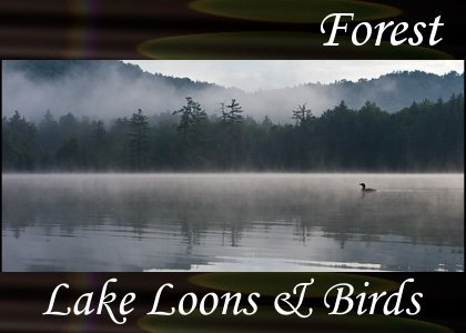 SoundScenes - Atmo-Forests - Lake Loons and Birds