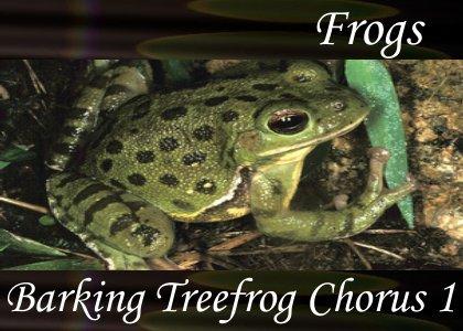 SoundScenes - Atmo-Frogs - Barking Treefrog Chorus 1