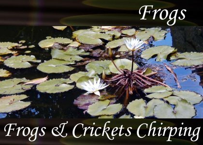 Frogs and Crickets Chirping