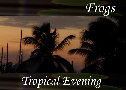 SoundScenes - Atmo-Frogs - Tropical Evening