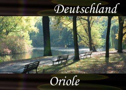 SoundScenes - Atmo-Germany - Deutschland, Oriole