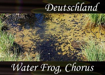 SoundScenes - Atmo-Germany - Deutschland, Water Frog Chorus