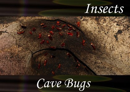 SoundScenes - Atmo-Insects - Cave Bugs