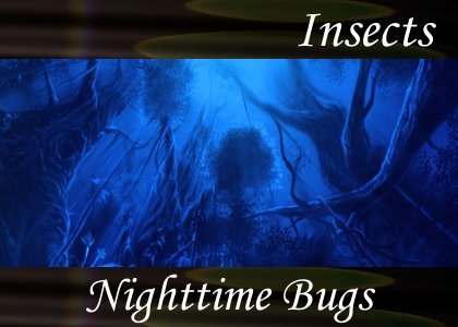SoundScenes - Atmo-Insects - Nighttime Bugs