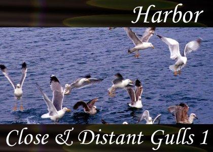 SoundScenes - SL Atmo-Harbor - Close and Distant Gulls 1