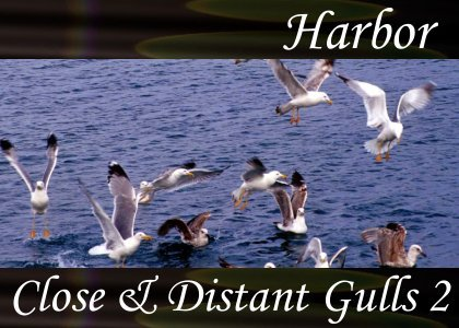 SoundScenes - SL Atmo-Harbor - Close and Distant Gulls 2