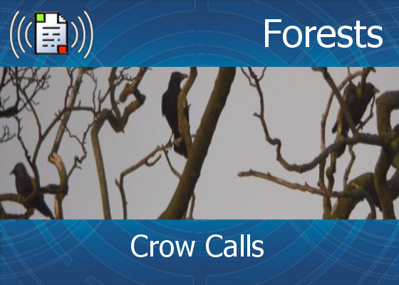 km-atmo-forests – crow calls