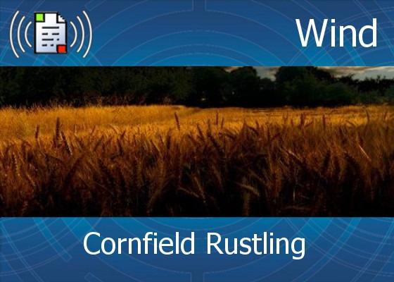 km-atmo-wind – cornfield rustling