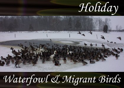 SoundScenes - Atmo-Holidays - Waterfowl and Migrant Birds