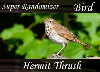 Hermit Thrush (12 Sounds)